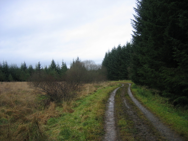 Forest Track, Pundershaw