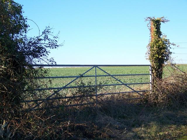Gate, Hogstock