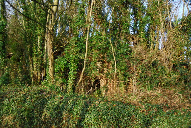 Woodland by the road to Lower Roadwater