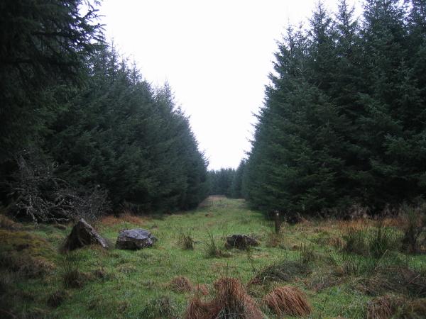 Footpath through Pundershaw Forest