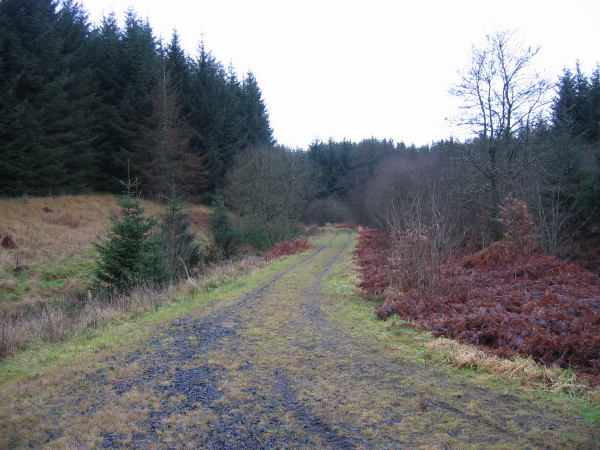 Forest Track leading to Watson's Walls