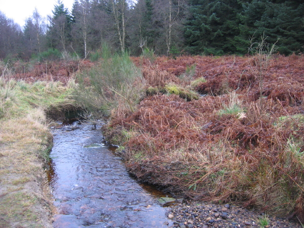 Swineshaw Burn