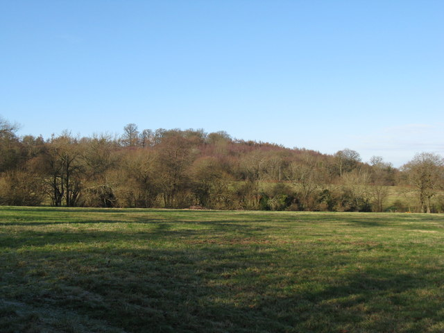View across fields to woods on SE side of Tower Hill
