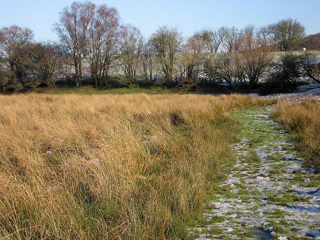 Riverside Walk, Cors Caron Nature Reserve