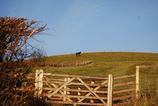 Horse on the hill by the road to Lower Roadwater