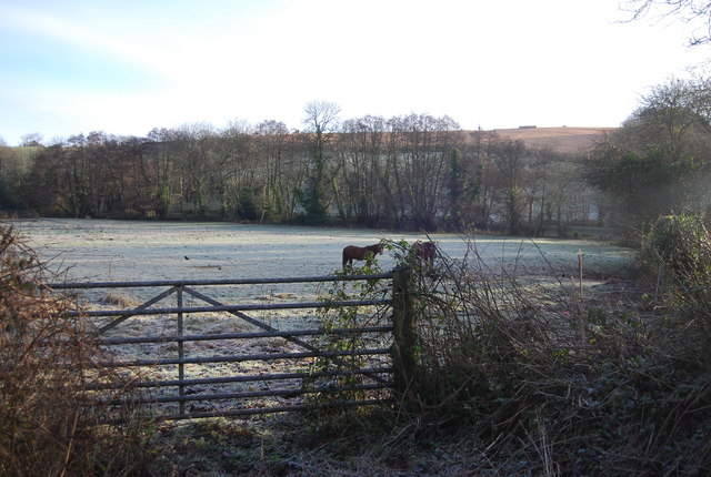 Gate & horse by the road to Lower Roadwater