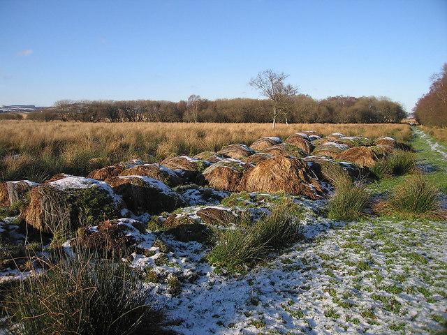 Hay bales at the edge of Cors Caron