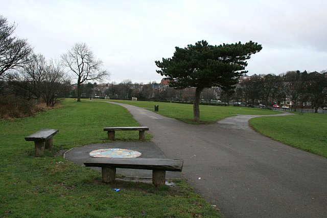 Seats and pine tree in Firth Park