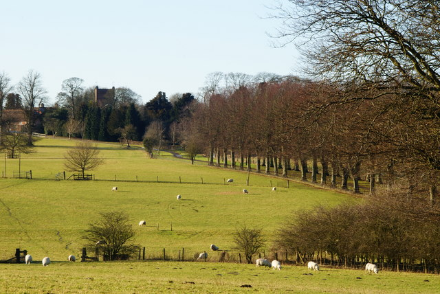 View Towards St.Mary's Church, Upper Froyle