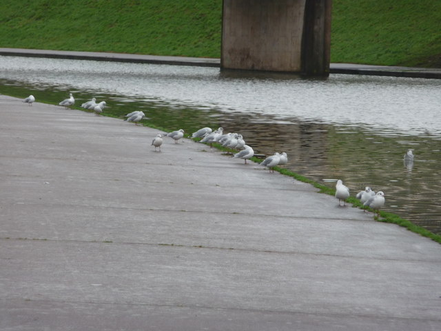 Exeter : Seagulls on the Riverside Path