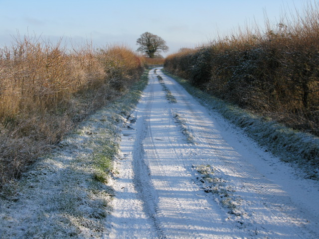 The Lane in the snow, Hinton Marsh