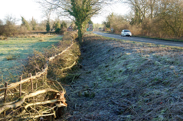Laid hedge and cleared ditch, A425, Lower Shuckburgh