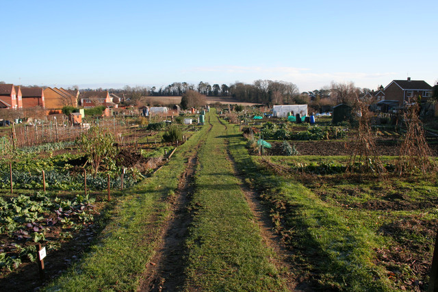 Everitt's Field Allotments