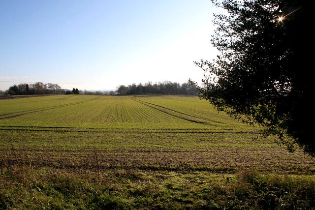 Field, Duck End, Maulden