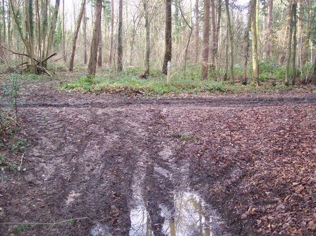 Footpath junction in Denge Wood
