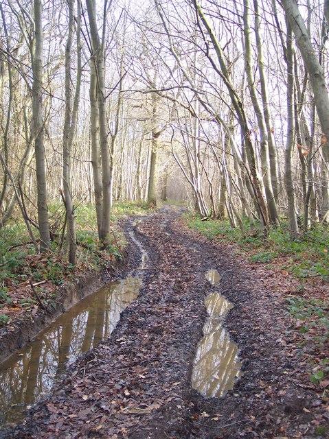 Footpath in Denge Wood