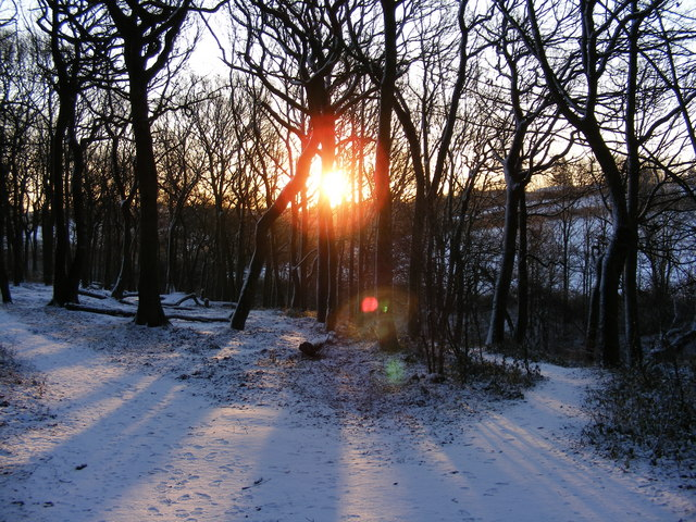 Birley Wood