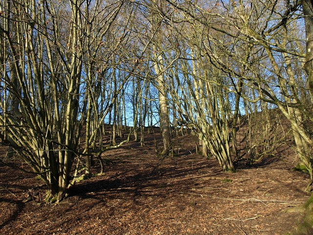 Woodland near Sawcombe Farm
