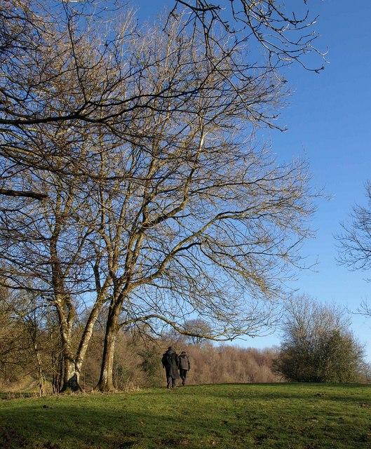 Near Sawcombe Farm