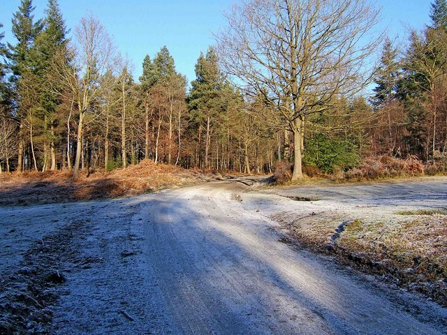 Forestry road, Wyre Forest
