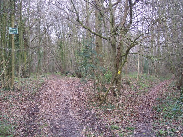 Footpath enters Penny Pot Wood
