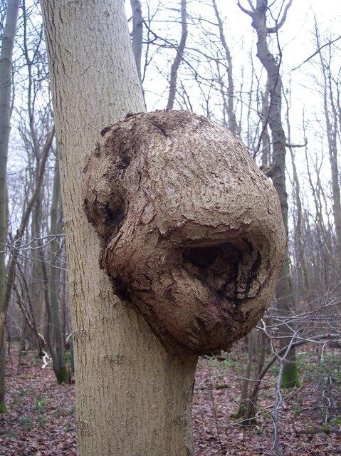Unusual tree growth