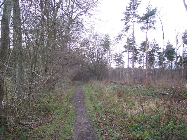 Footpath junction in Denge Wood (2)
