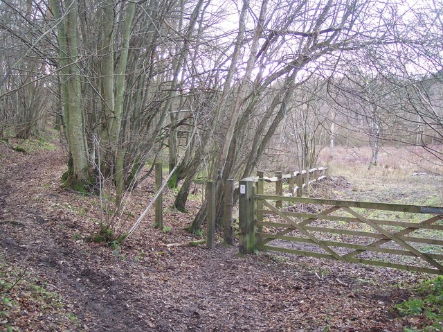 Entrance to the Warren, Denge Wood