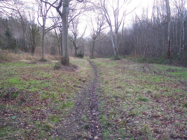 Footpath in Denge Wood