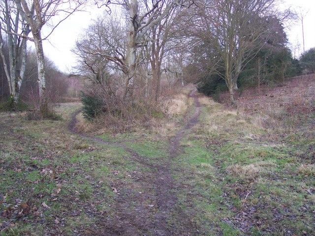 Footpath and track junction in Denge Wood