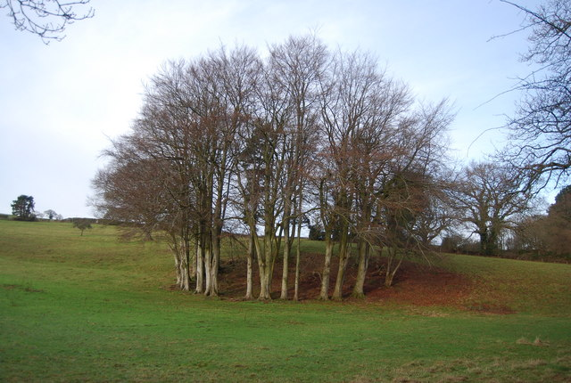 Clump of trees in the grounds of Croydon Hall