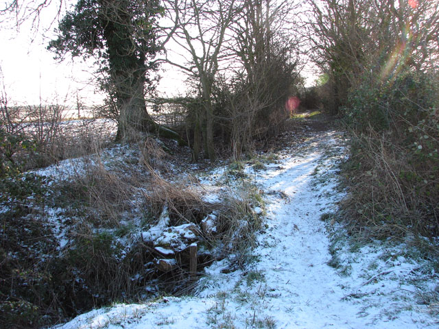 Frosty path to Hales Hall