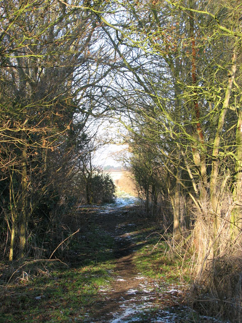 Narrow path through thicket