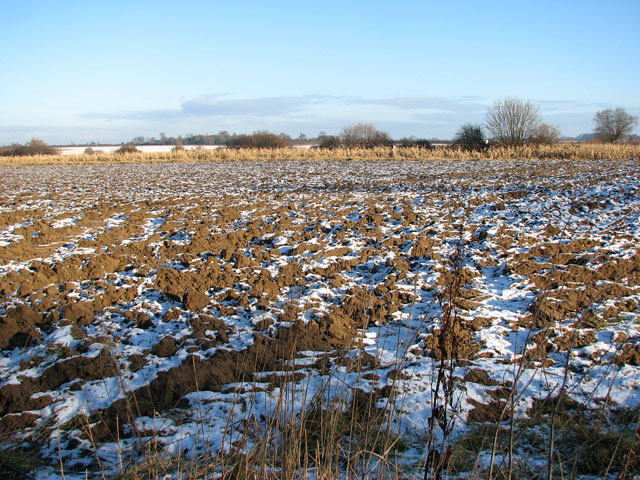 Frozen field beside the path to Hales Hall