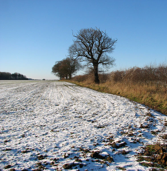 View along a field boundary ditch