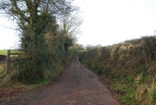Narrow rural lane, Felon's Oak