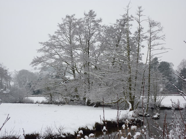 Snow covered trees at a bend in the River Wye, Bakewell