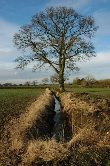 Tree and ditch at Gannow Farm