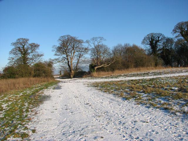 Path past Hales Hall