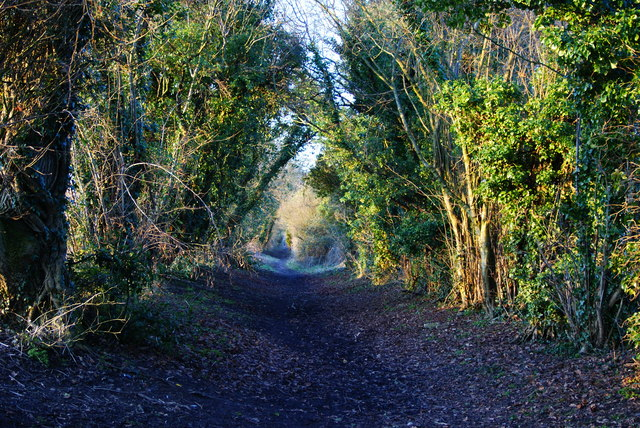 Bridleway at Cuckoo's Corner, Holybourne, Hampshire