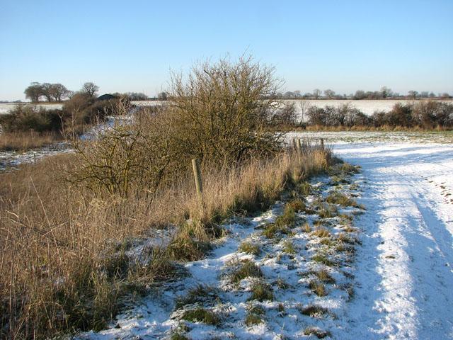 Farm track past Hales Hall