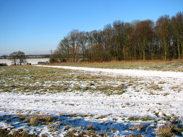 Snowy tracks past the copse west of Hales Hall