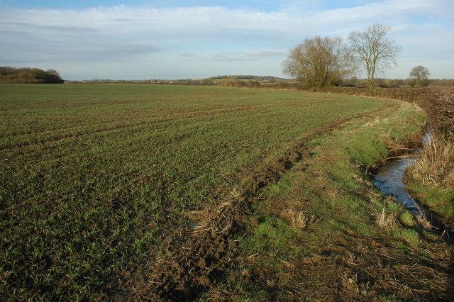 Winter cereal in a field, Morton Underhill