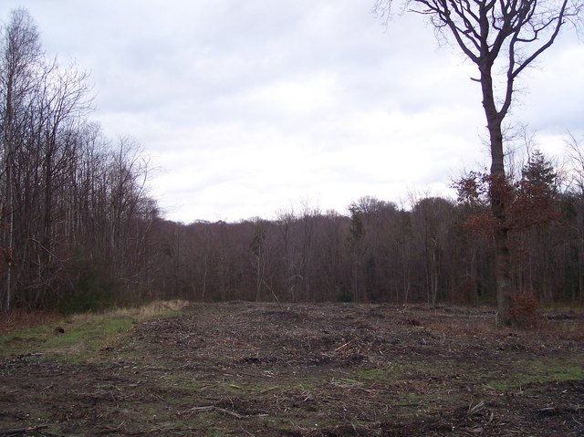 Coppicers track in Denge Wood (2)