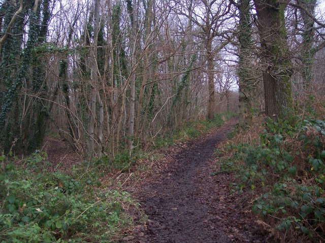 Footpath junction on bridleway in Mounts Wood