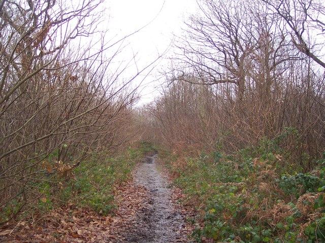 Bridleway to Capel Road