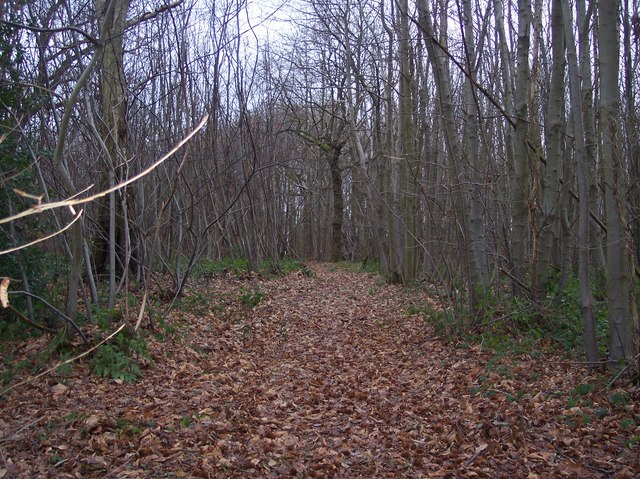 Footpath to Buckholt Wood