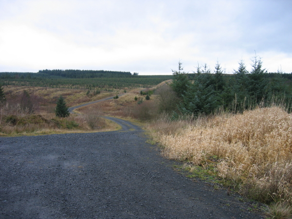 Forest Road near Pundershaw