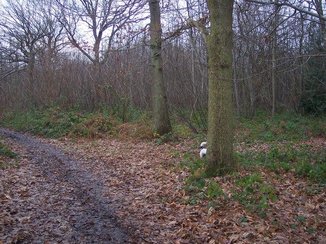Bridleway junction in Mounts Wood