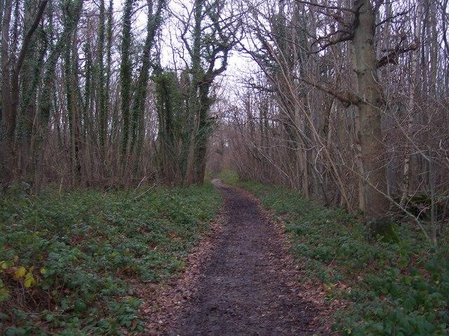 Bridleway to Buckholt Farm